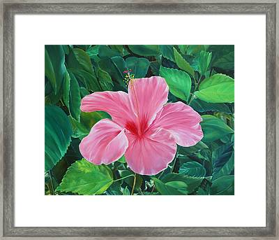 Framed Print featuring the painting Hibiscus by Elizabeth Lock