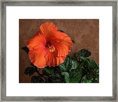 Hibiscus Fine Art Framed Print