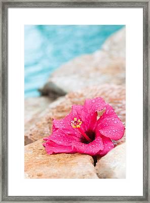 Hibiscus Flower Framed Print by Amanda Elwell