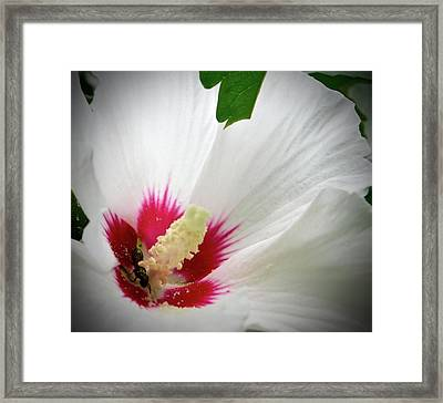 Hibiscus For One Framed Print
