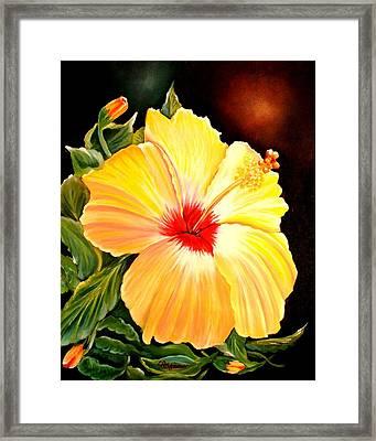 Hibiscus Glory Framed Print