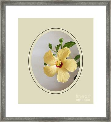 Hibiscus In Oval Framed Print