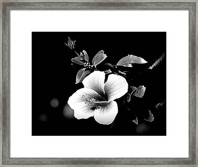 Framed Print featuring the photograph Hibiscus In The Dark by Lori Seaman