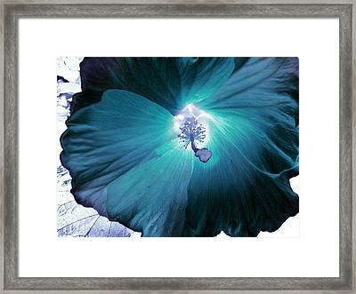 Hibiscus Inversion  Framed Print by Shawna Rowe