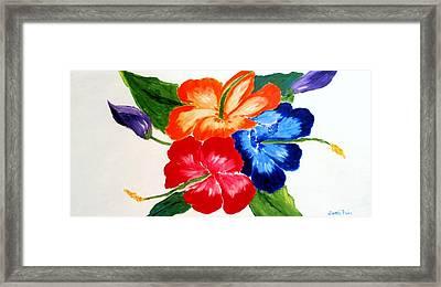 Hibiscus Framed Print by Jamie Frier