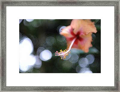Hibiscus Framed Print by Jessica Rose