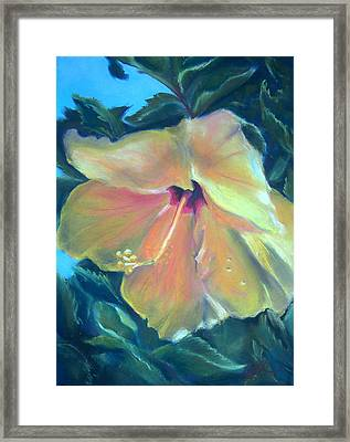Hibiscus Framed Print by Lisa Ikegami