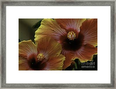 Framed Print featuring the photograph Hibiscus by Lori Mellen-Pagliaro