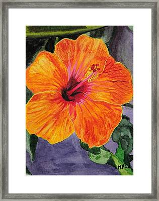 Hibiscus Framed Print by Michelle Hand