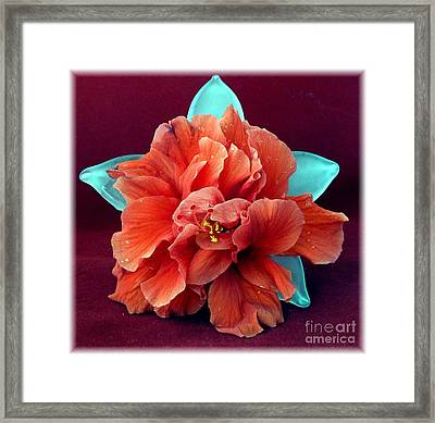 Hibiscus On Glass Framed Print by Barbie Corbett-Newmin