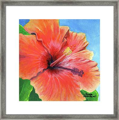 Hibiscus Passion Framed Print