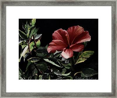 Hibiscus Framed Print by Patricia Halstead