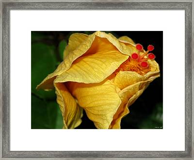 Hibiscus Profile Framed Print