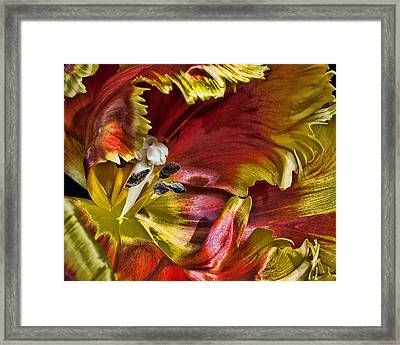 Hibiscus Spice Framed Print