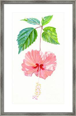 Hibiscus Sprinkle Rain, Rosa Sinensis Framed Print by Sharon Freeman