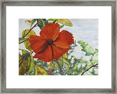 Hibiscus St Thomas Framed Print by Carol Flagg