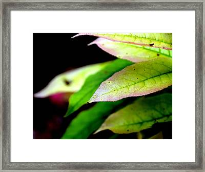 Hickory Leaf Framed Print