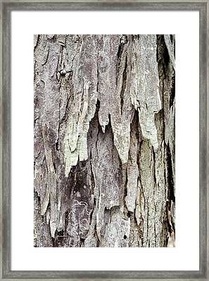 Framed Print featuring the photograph Hickory Tree Bark Abstract by Christina Rollo