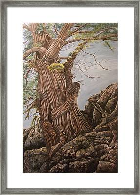 Hidden Art Juniper Framed Print by Cindy Wright
