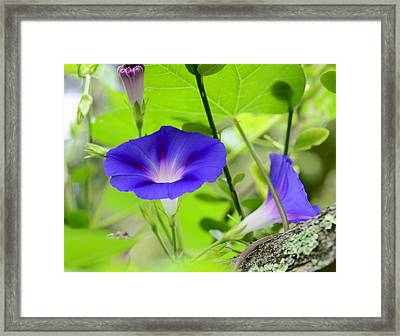 Framed Print featuring the photograph Hidden Beauty by Corinne Rhode