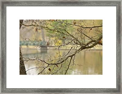 Hidden Bridge Framed Print by Robert Joseph