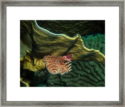 Hidden Christmastree Worm Framed Print by Jean Noren
