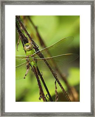 Hidden Dragon Framed Print