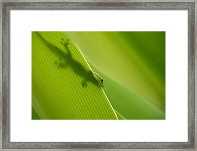 Hidden In Plain Sight Framed Print