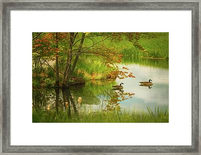 Hidden In Spring Framed Print