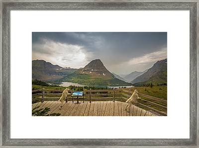 Hidden Lake Overlook // Glacier National Park Framed Print