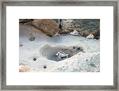 Hidden Shells On Bimini Beach Framed Print