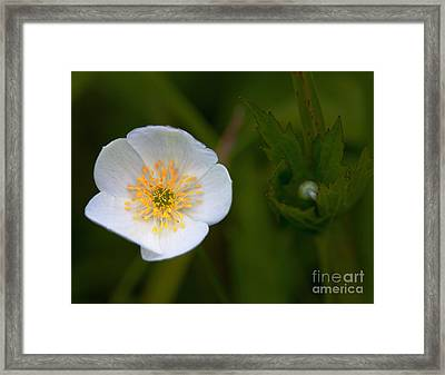 Hidden Tears Framed Print