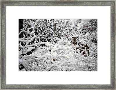 Hidden Treasure Framed Print by Eric Liller
