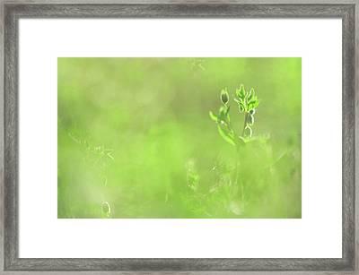 Hidden Treasure. Green World Framed Print by Jenny Rainbow