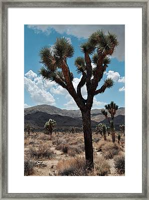 Hidden Valley Joshua Tree Portrait Framed Print