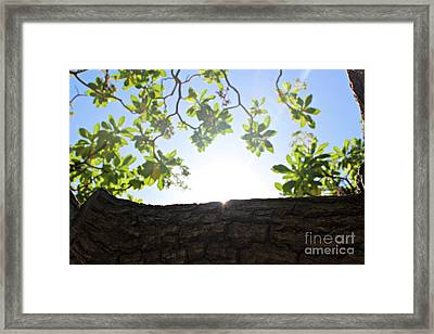Framed Print featuring the photograph Hide And Seek by Cendrine Marrouat
