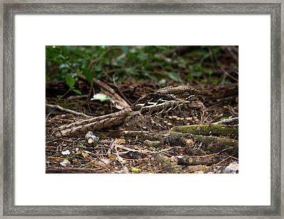 Hide And Seek Framed Print by Debra Martz