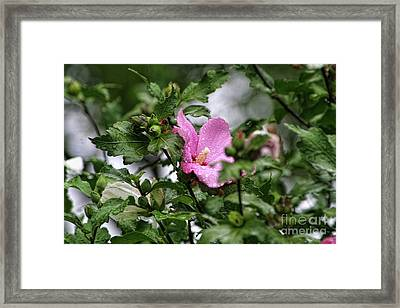 Hide And Seek Framed Print by Joan Bertucci