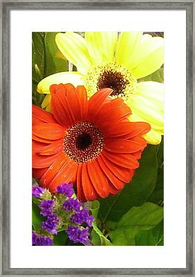 Hide And Seek Framed Print by Kimberly Morin
