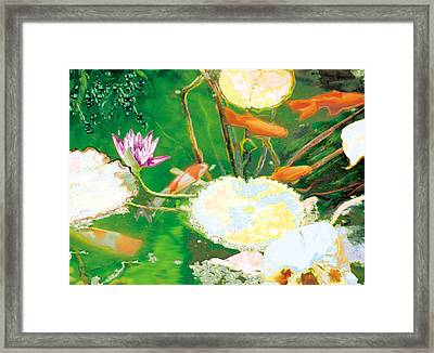 Hide And Seek Kio In The Green Pond Framed Print by Judy Loper