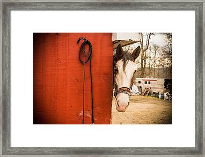 Hide And Seek Framed Print by Kristopher Schoenleber