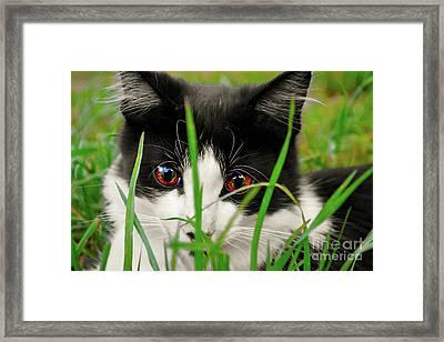 Hide And Seek  Framed Print by Naomi Burgess