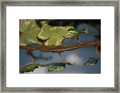 Hide And Seek Framed Print by Trudi Southerland