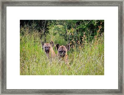 Hide-n-seek Hyenas Framed Print