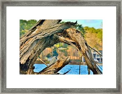 Hiding Among The Trees Framed Print