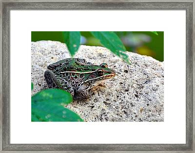 Hiding Framed Print by Brittany H