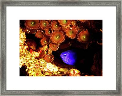 Framed Print featuring the photograph Hiding Damsel by Anthony Jones