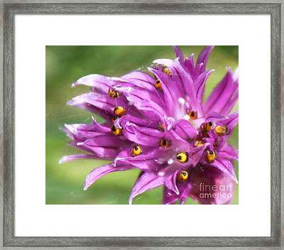 Hiding Framed Print by Erica Hanel