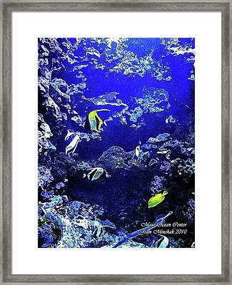 Hiding Fish Framed Print by Joan  Minchak