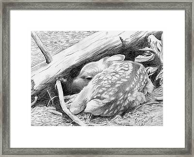 Hiding In Plain Sight - White Tail Deer Fawn Framed Print